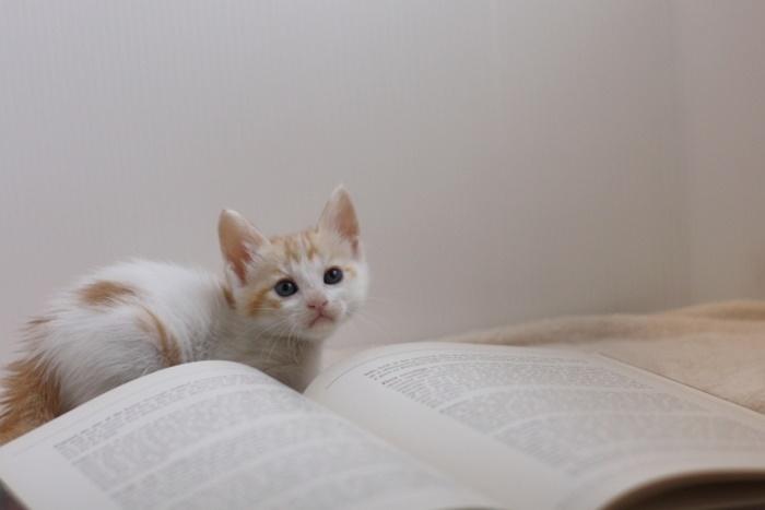 読書が苦手な人にオーディオブックをおすすめする理由