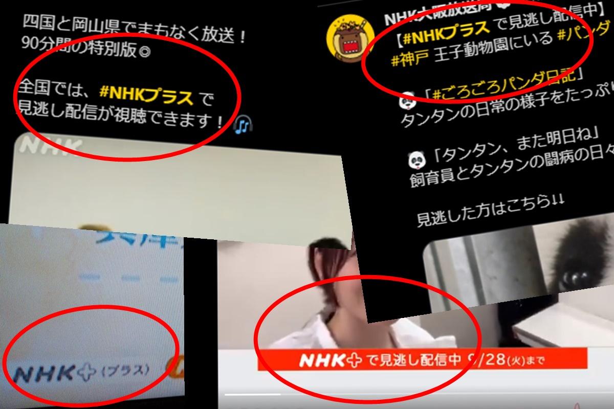 NHK番組のインターネット見逃し配信「NHKプラス」とは?必要な料金・受信料、利用方法(使い方・始め方)について